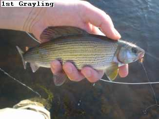 grayling
